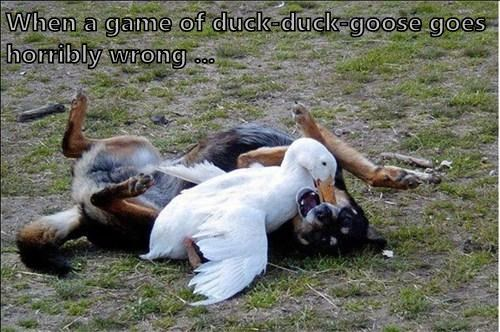 When a game of duck-duck-goose goes horribly wrong ...