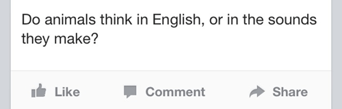 languages,thinking,swedish,animals,failbook,g rated