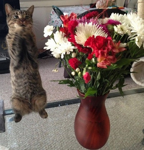 for me,flowers,Cats