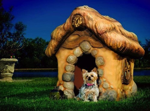 A Doghouse Straight Out of Toon Town