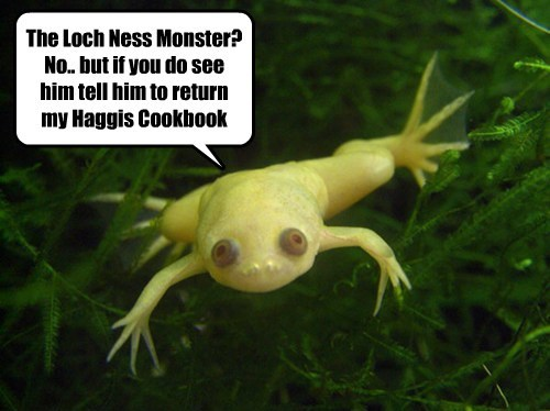 loch ness monster,cook book,funny