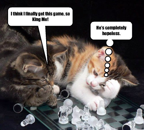 Some kittehs never learn how to play chess.