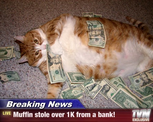 Breaking News - Muffin stole over 1K from a bank!