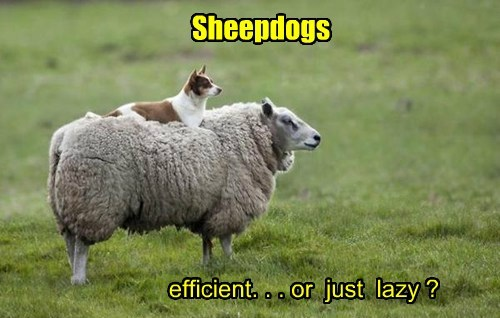 Sheepdogs
