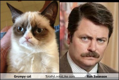 Grumpy cat Totally Looks Like Ron Swanson