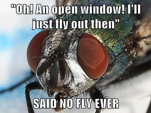 """Oh! An open window! I'll just fly out then""  SAID NO FLY EVER"