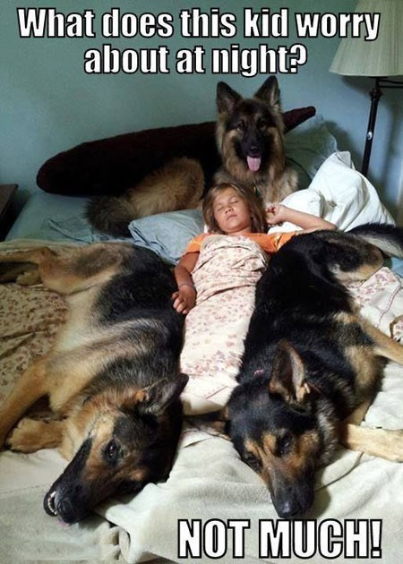 dogs,worry,drool,cute,sleep