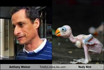 Anthony Weiner Totally Looks Like Nudy Bird
