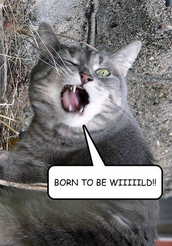 BORN TO BE WIIIIILD!!
