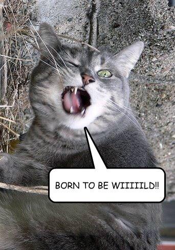 BORN TO BE WIIIIILD!!