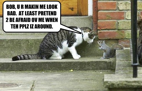 people,squirrel,Cats,funny,agreement