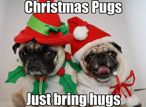 Christmas Pugs     Just bring hugs