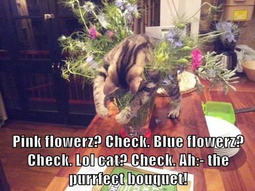 Pink flowerz? Check. Blue flowerz? Check. Lol cat? Check. Ah:- the purrfect bouquet!