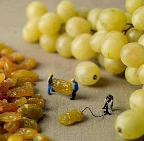 How Grapes Are Made