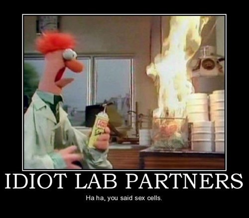 Dammit Beaker, Not Again!
