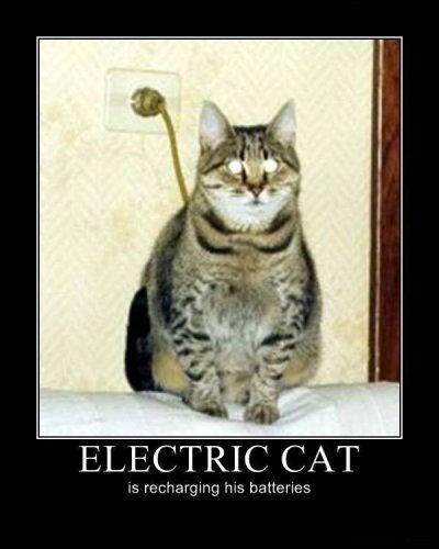 plug,cat,electric,funny,animals