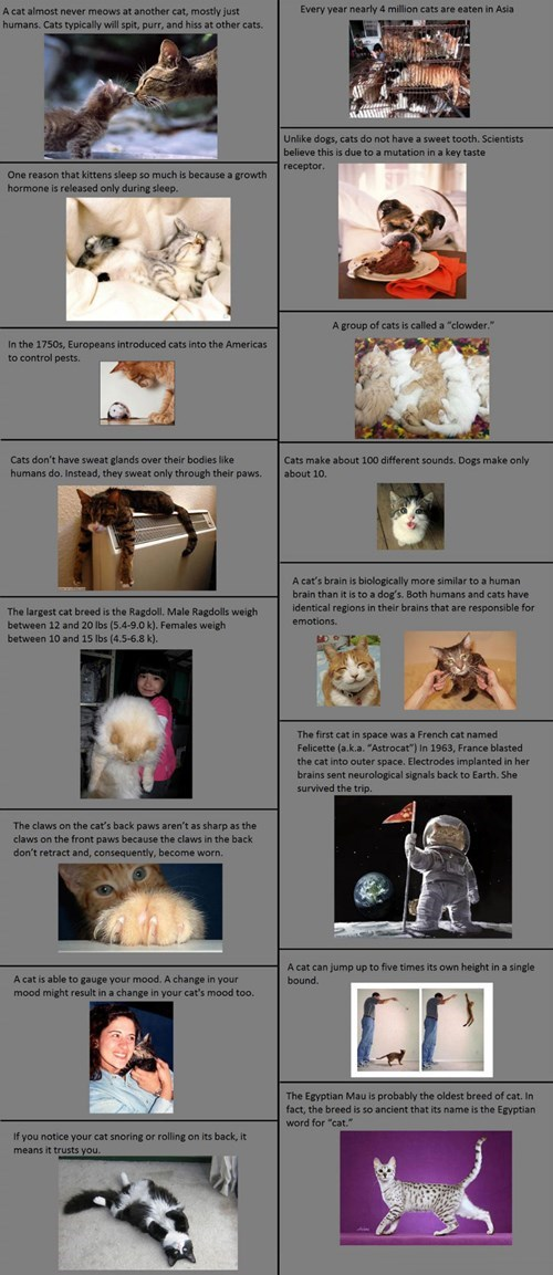 Facts on Cats