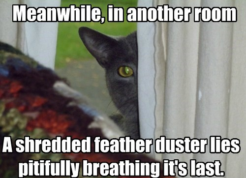 Feather duesters can breathe?  Wait.. What?