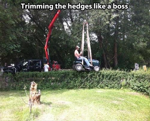 Who Needs Hedge Clippers?