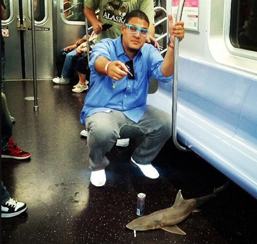 Didn't See That Coming of the Day: Dead Shark Found on NYC Subway