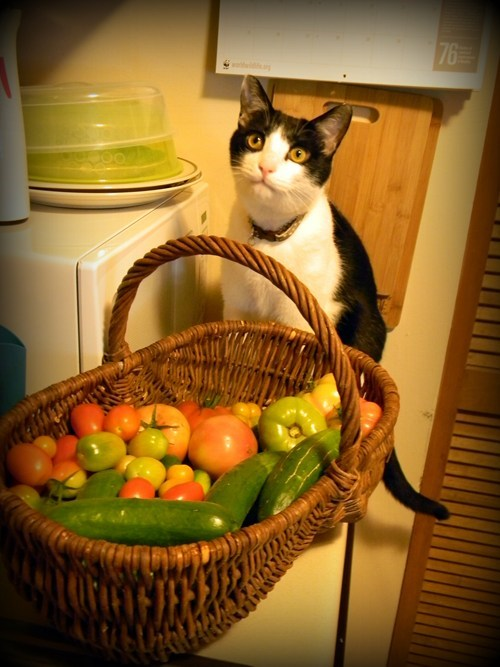 This is Ser Pounce-a-lot Helping Me With my Vegetables