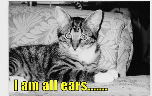 I am all ears.......