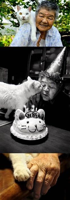heartwarming,world cat day,cute,stories