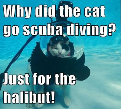 Why did the cat go scuba diving?  Just for the halibut!