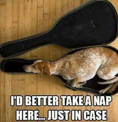 pun,case,dogs