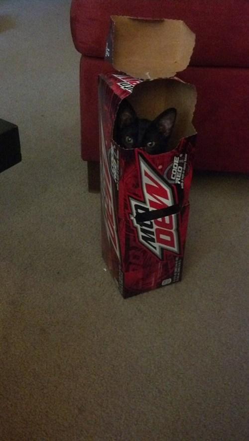 caffeinated,box,Cats,funny