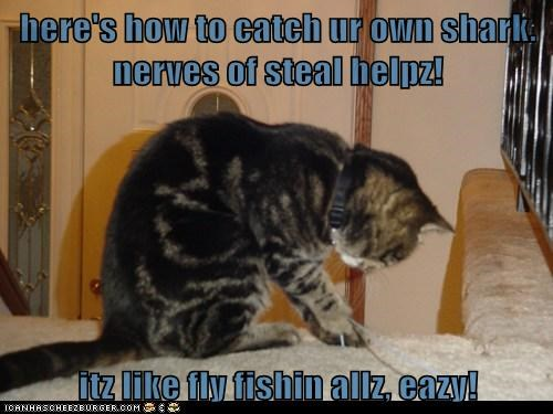 here's how to catch ur own shark.  nerves of steal helpz!  itz like fly fishin allz, eazy!