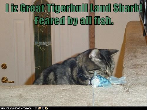 I iz Great Tigerbull Land Shark!   Feared by all fish.