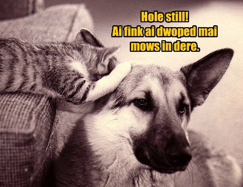dogs,ear,Cats,funny