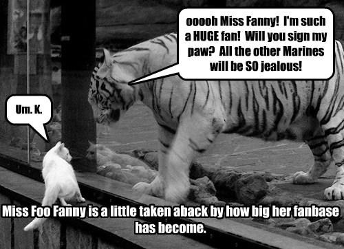 tigers,foofany,fan,funny
