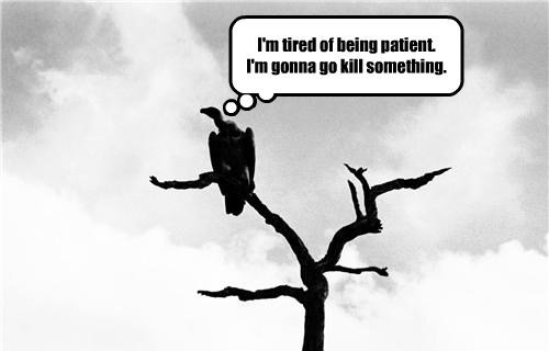 patience,vultures,funny