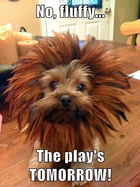 No, fluffy...  The play's TOMORROW!