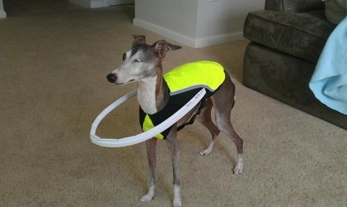 Owner Invents Suit to Keep Her Blind Dog from Running Into Things