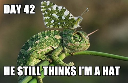 undercover,moth,hat,funny