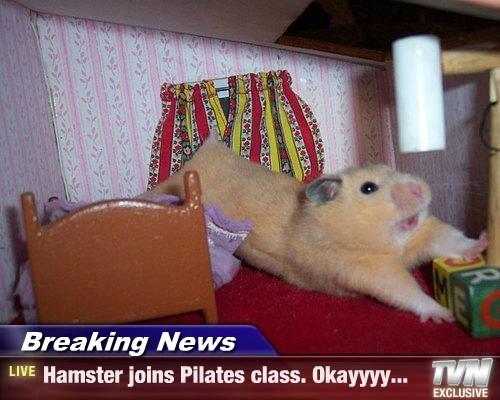 Breaking News - Hamster joins Pilates class. Okayyyy...