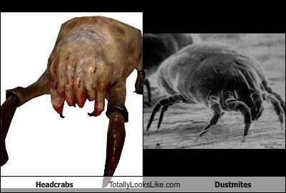 Headcrabs Totally Look Like Dustmites