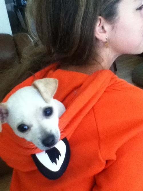 There's a Pup Hiddin in my Hoodie