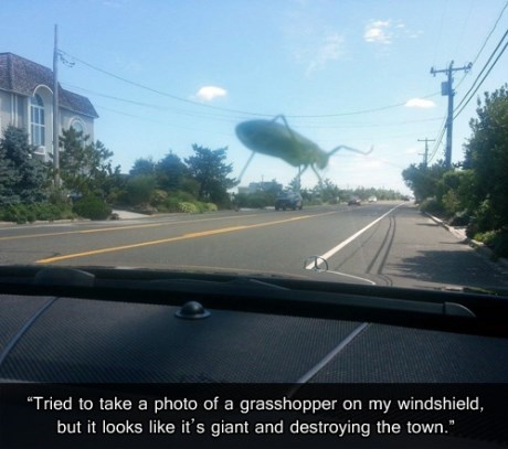 RUN! GIANT BUG ON THE LOOSE!