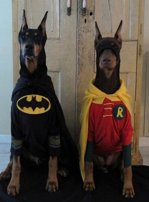 guard dawgs