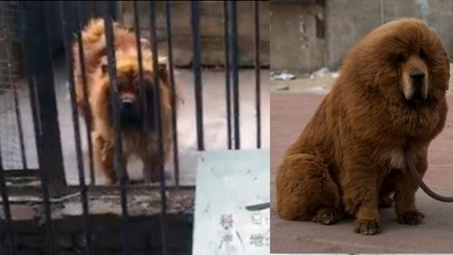Zoo in China Under Fire After Trying to Pass Off Common Species as Exotic Creatures