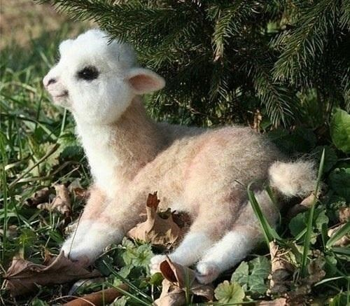 Adorable Baby Alpaca: Real or Doll?