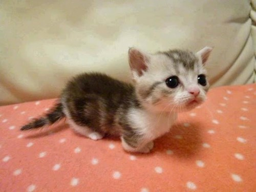 Incredibly Cute Kitten