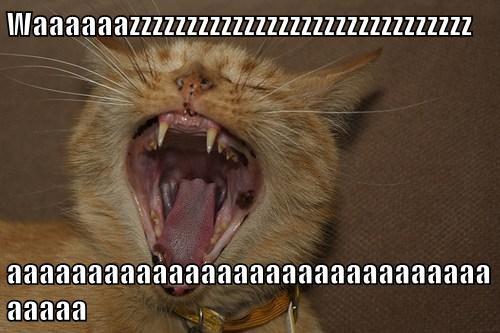 Waaaaaazzzzzzzzzzzzzzzzzzzzzzzzzzzzzz  aaaaaaaaaaaaaaaaaaaaaaaaaaaaaaaaaaa