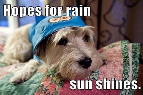 Hopes for rain  sun shines.