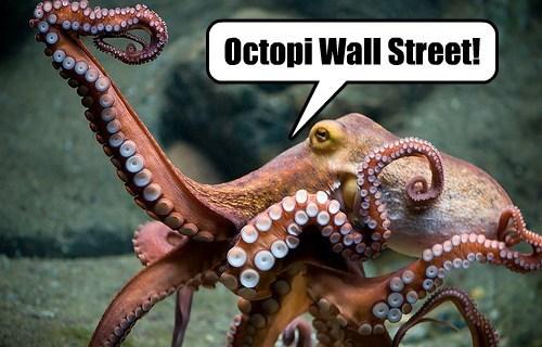 occupy,pun,octopus