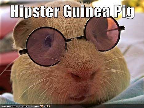 Hipster Guinea Pig